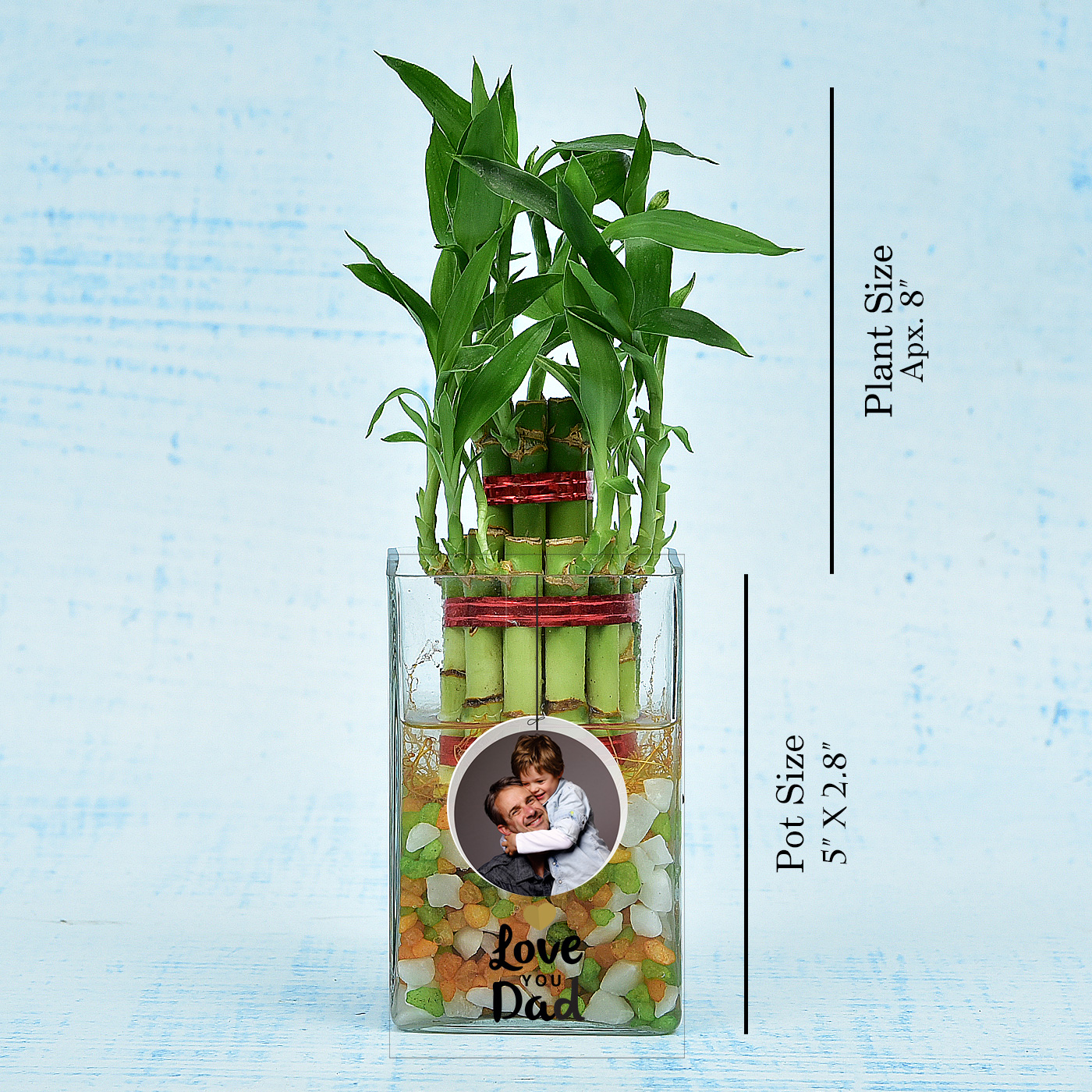 Dad-Special-Two-Layer-Lucky-Bamboo-In-Personalized-Photo-Glass-Vase