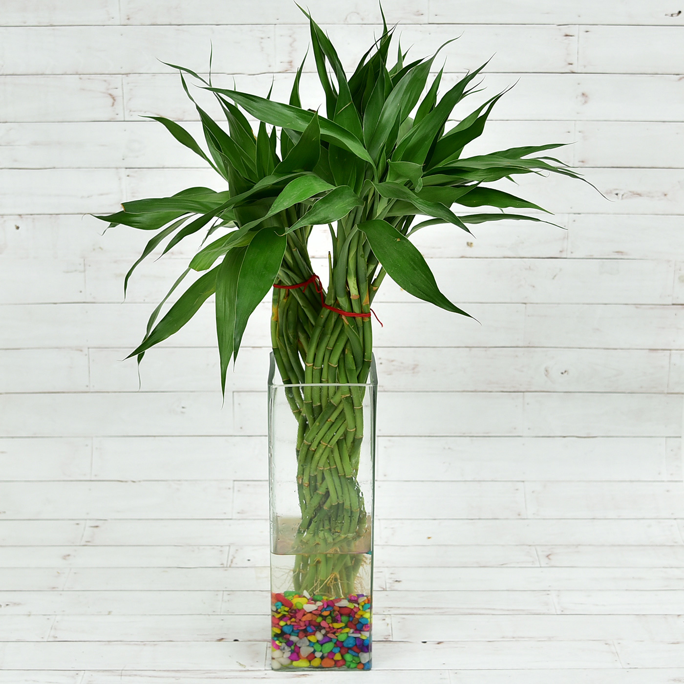 Lovely-Twin-Braided-Bamboo-Plant-In-A-Long-Glass-Vase