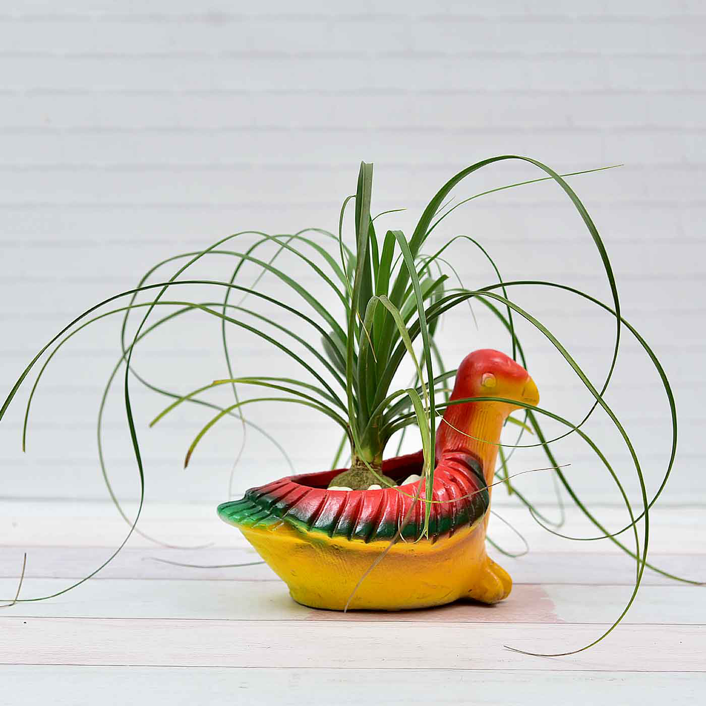 Nolina-Ponytail-Palm-In-Earthen-Pigeon-Pot